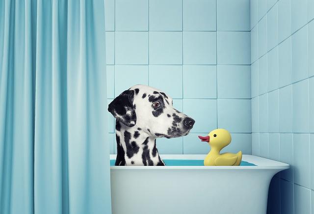 犬のシャンプーお風呂の写真