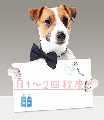 犬のシャンプーの頻度の画像