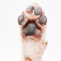 犬の肉球の写真
