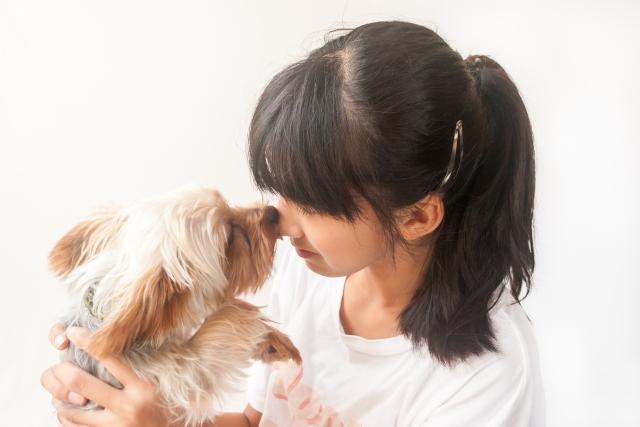 犬の留守番分離不安の画像