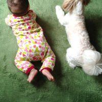 犬と赤ちゃんの写真