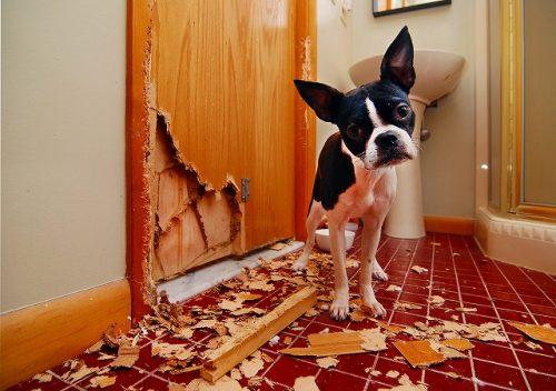 犬の留守番のいたずらの画像
