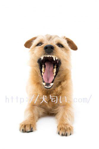 犬が口を開けている写真