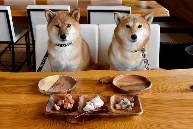 犬手作りご飯のトップの画像