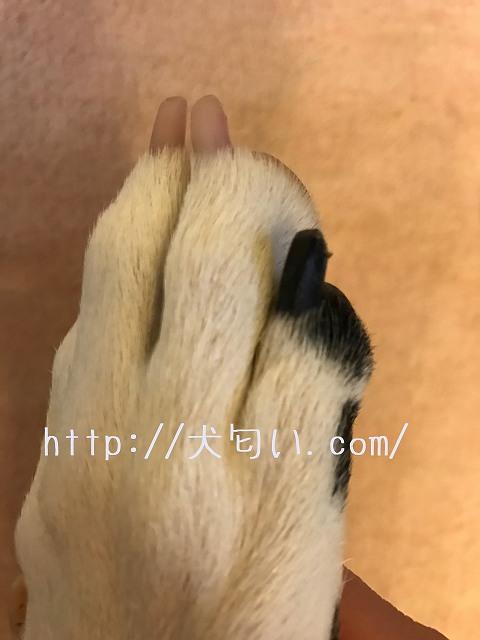 犬の爪切り黒爪の写真
