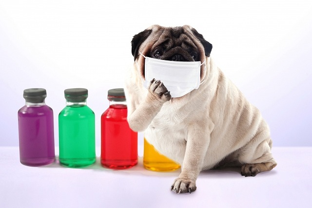犬の花粉症の写真