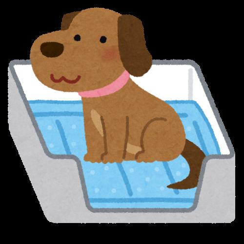 犬の留守番のトイレの画像