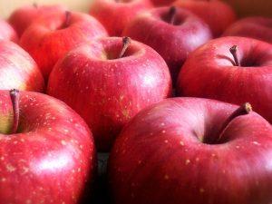 ファインペッツのリンゴの画像