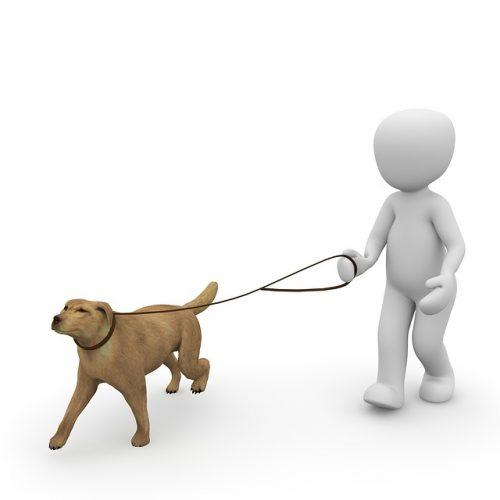 犬の留守番の散歩の画像