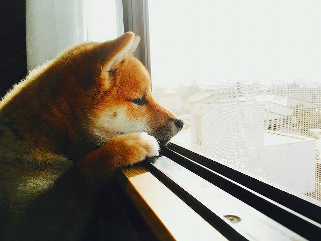 犬の留守番の画像