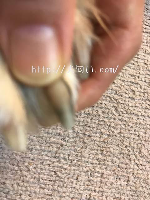 犬の爪切り爪を持っている写真