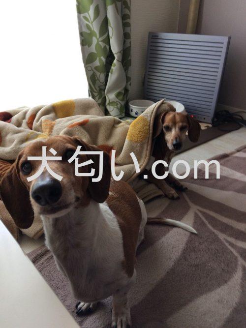 モグワンを開けた時の犬達興味津々の写真