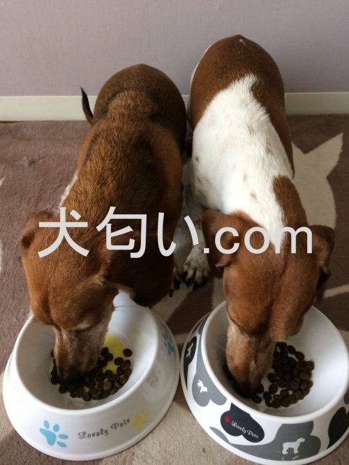 モグワンをガツガツ食べる写真