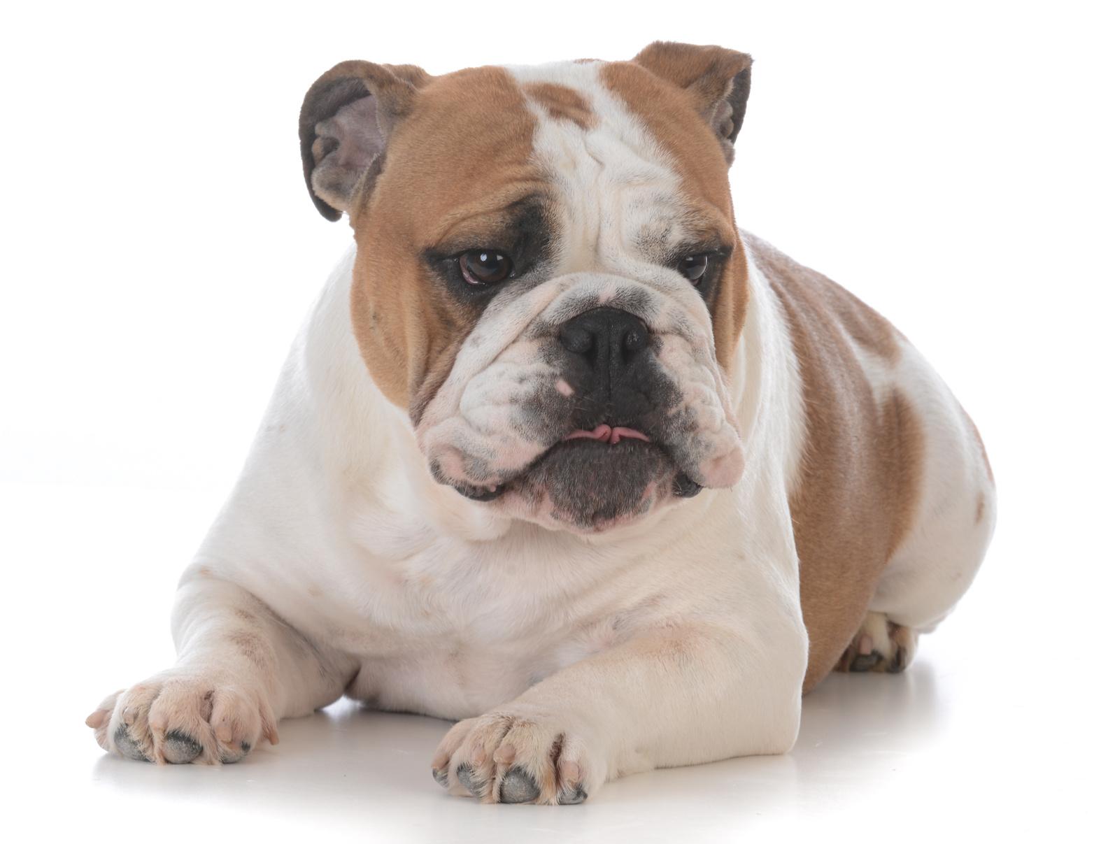 犬 栄養の写真