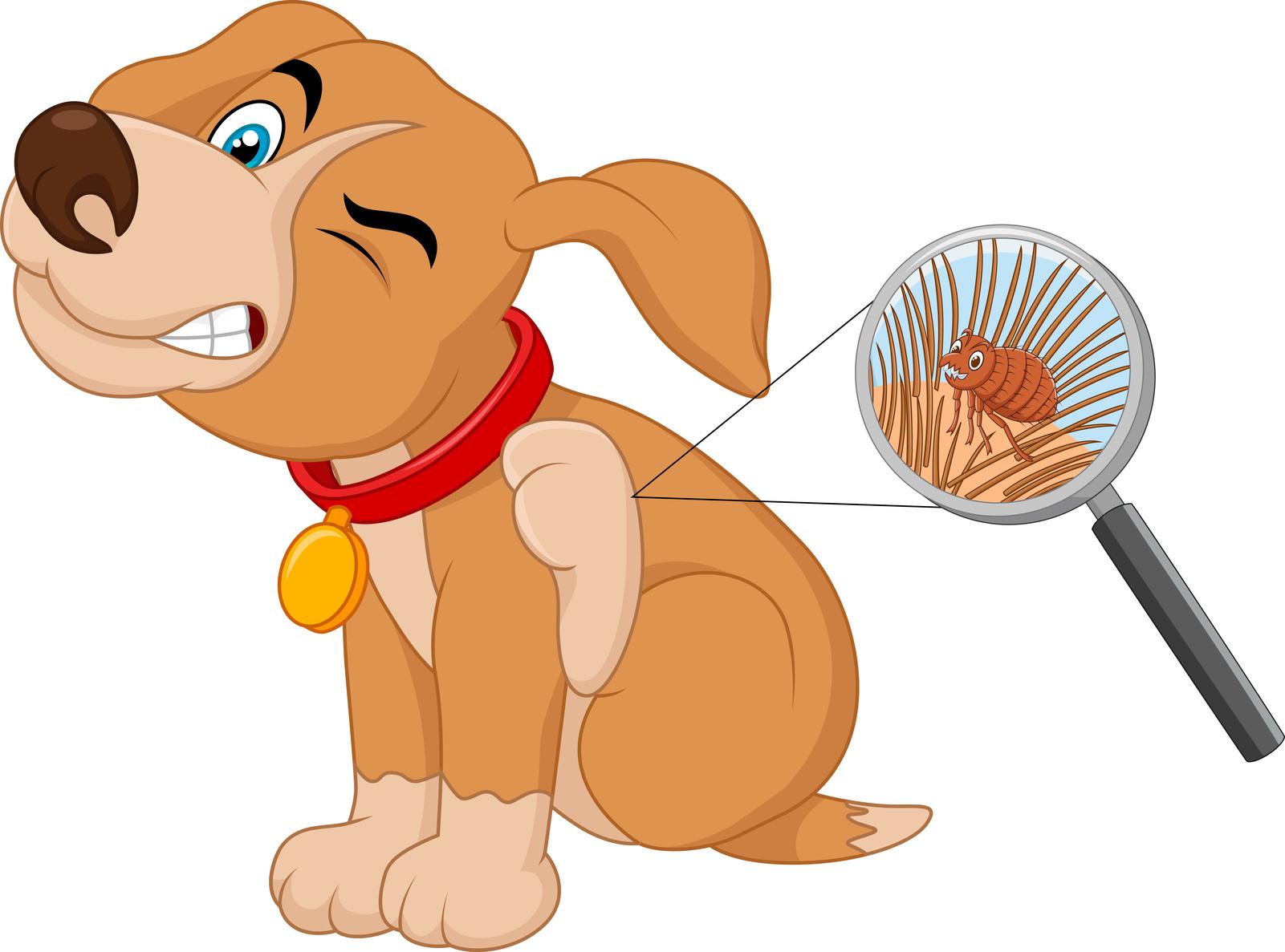 犬 ノミ アレルギーの写真