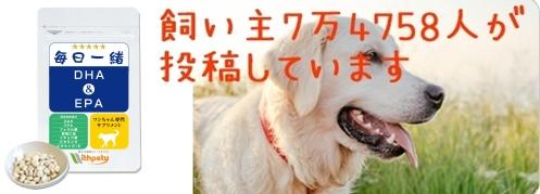 犬の認知症予防サプリ毎日一緒のトップの画像