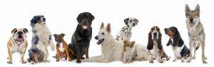 ふれあいの色んな犬種の画像